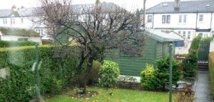 bare apple tree